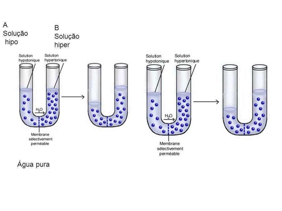 A Solução hipo B Solução hiper Água pura