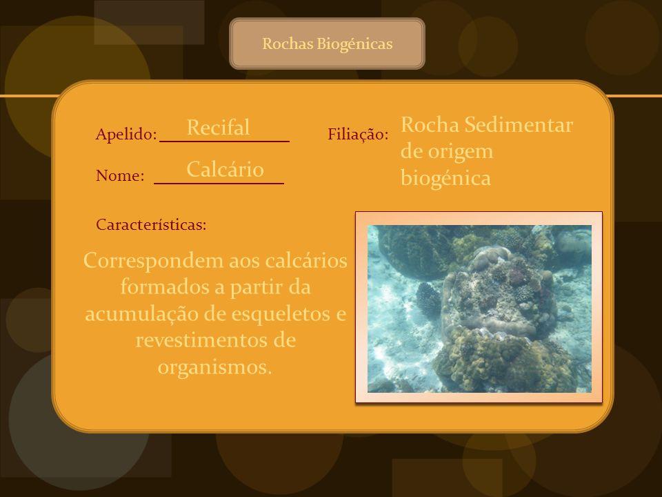 Rocha Sedimentar de origem biogénica