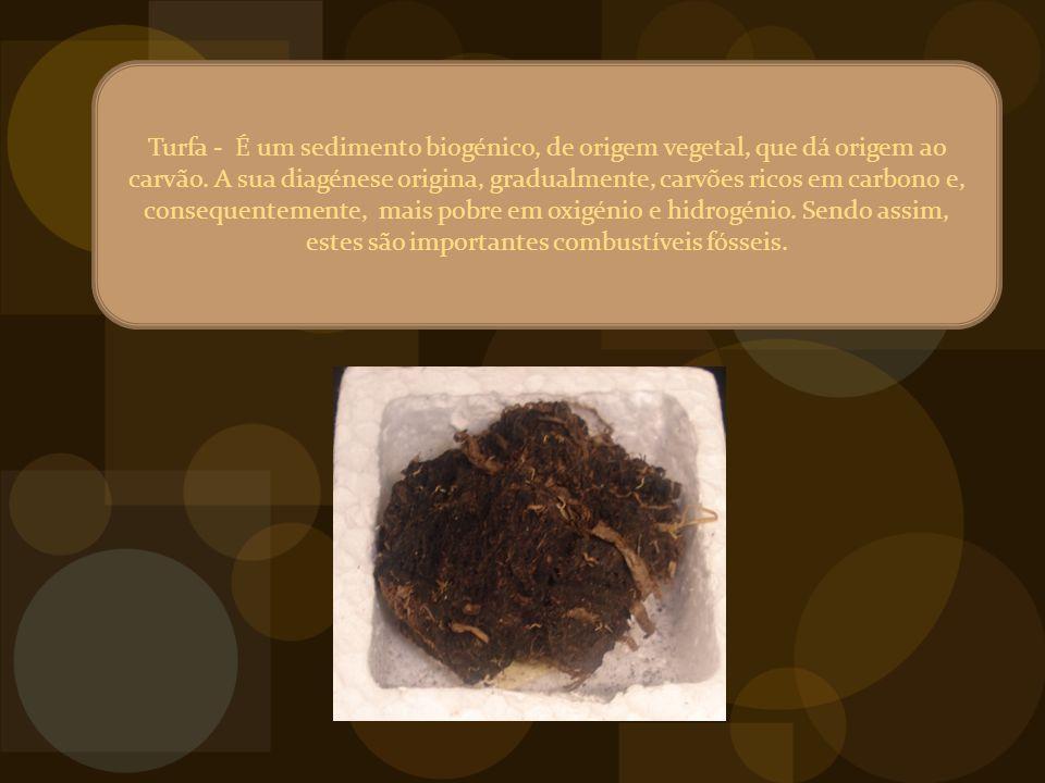 Turfa - É um sedimento biogénico, de origem vegetal, que dá origem ao carvão.