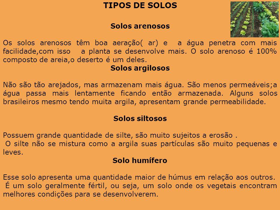 TIPOS DE SOLOS Solos arenosos