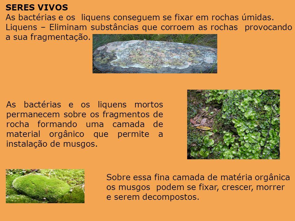 SERES VIVOS As bactérias e os liquens conseguem se fixar em rochas úmidas.