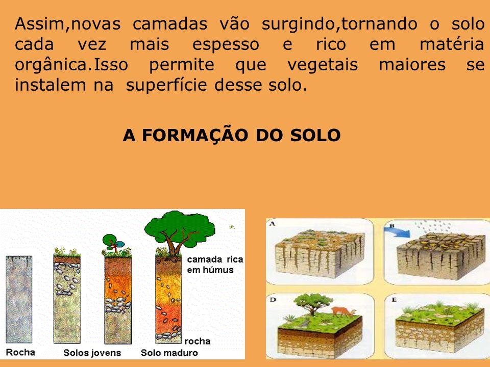 Assim,novas camadas vão surgindo,tornando o solo cada vez mais espesso e rico em matéria orgânica.Isso permite que vegetais maiores se instalem na superfície desse solo.