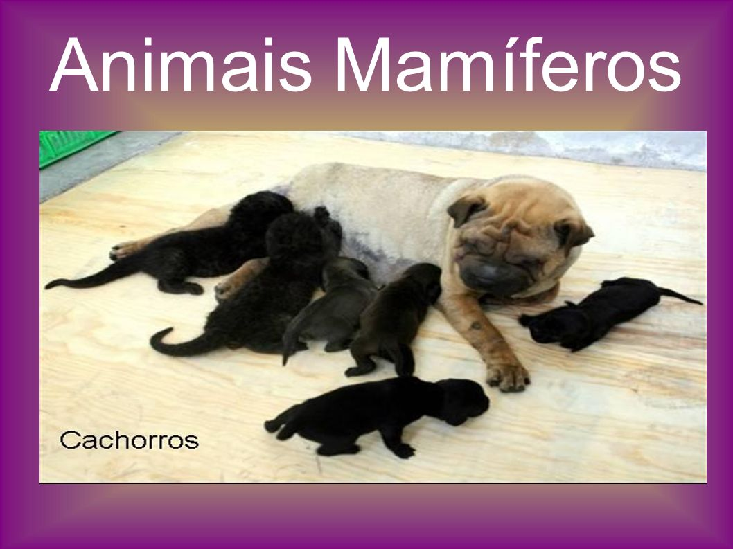 Animais Mamíferos