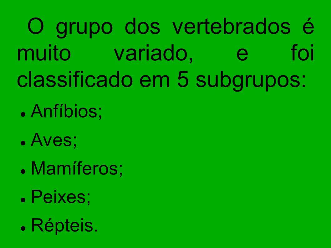 Anfíbios; Aves; Mamíferos; Peixes; Répteis.