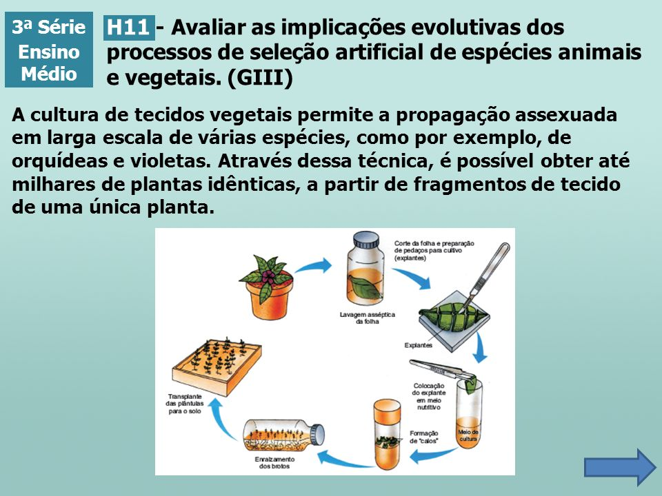 3ª Série Ensino Médio. H11 - Avaliar as implicações evolutivas dos processos de seleção artificial de espécies animais e vegetais. (GIII)