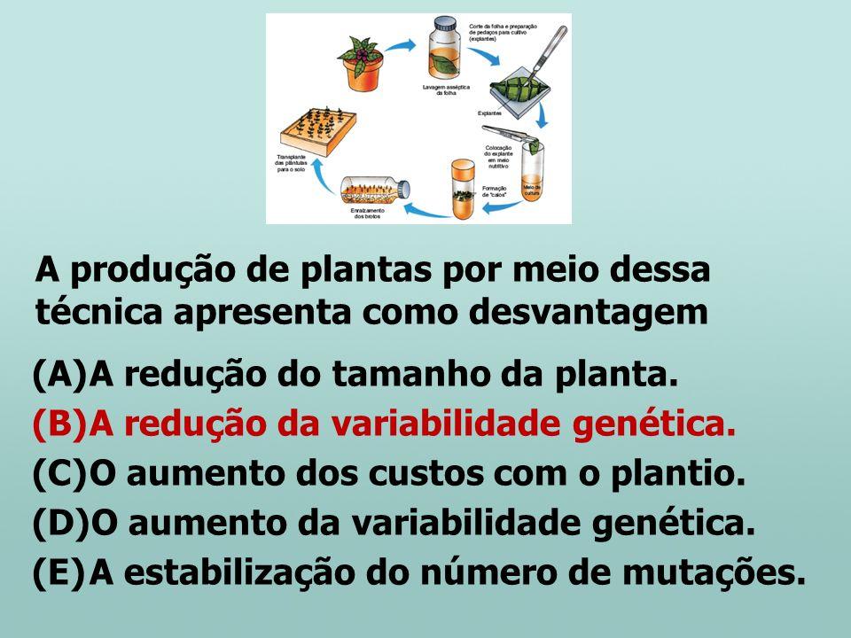 A produção de plantas por meio dessa técnica apresenta como desvantagem
