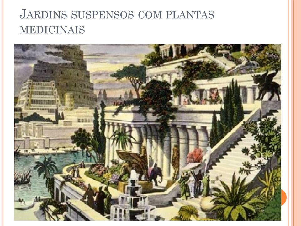 Jardins suspensos com plantas medicinais