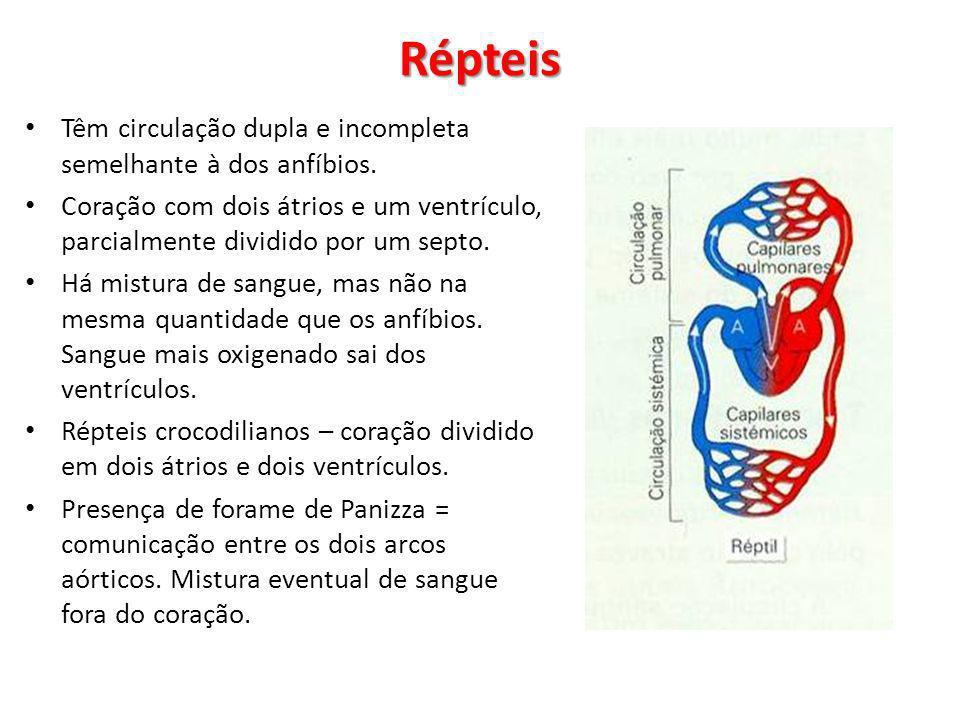 Répteis Têm circulação dupla e incompleta semelhante à dos anfíbios.