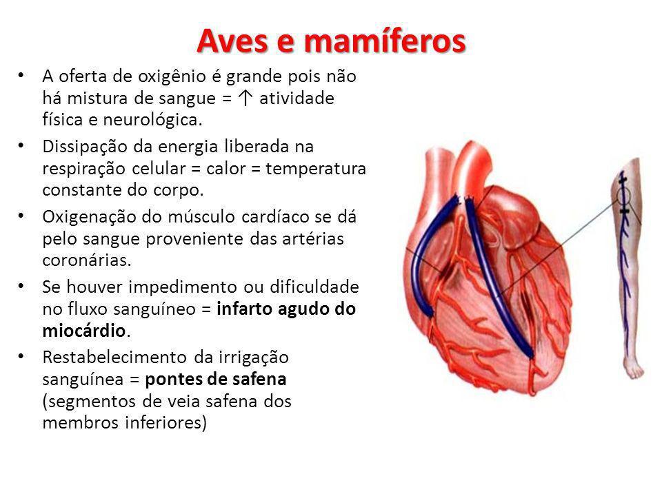 Aves e mamíferos A oferta de oxigênio é grande pois não há mistura de sangue = ↑ atividade física e neurológica.