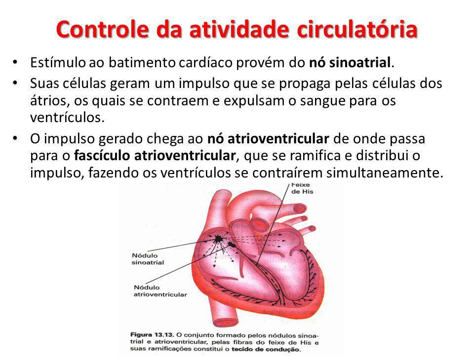 Controle da atividade circulatória