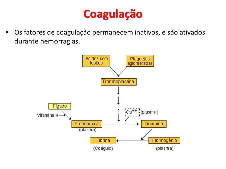 Coagulação Os fatores de coagulação permanecem inativos, e são ativados durante hemorragias.