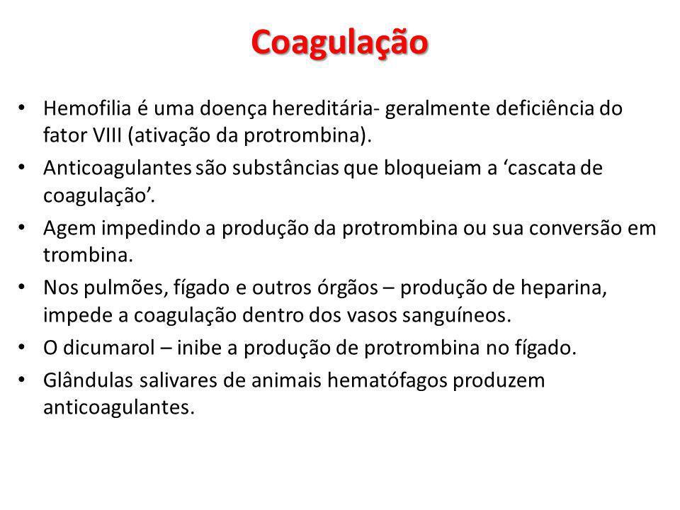 Coagulação Hemofilia é uma doença hereditária- geralmente deficiência do fator VIII (ativação da protrombina).