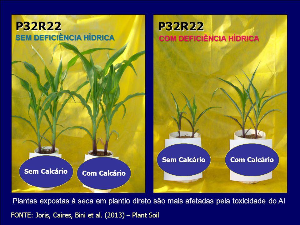 P32R22 P32R22 SEM DEFICIÊNCIA HÍDRICA COM DEFICIÊNCIA HÍDRICA