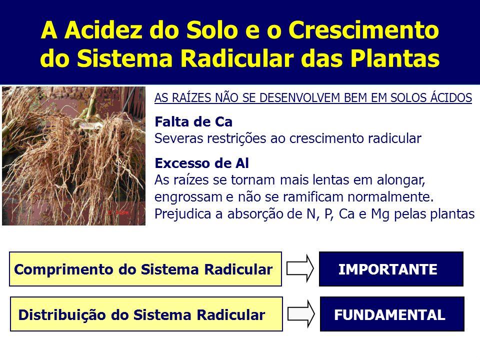 A Acidez do Solo e o Crescimento do Sistema Radicular das Plantas