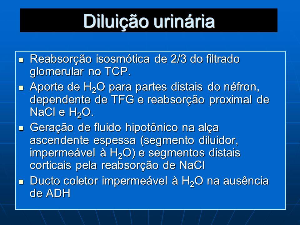Diluição urináriaReabsorção isosmótica de 2/3 do filtrado glomerular no TCP.