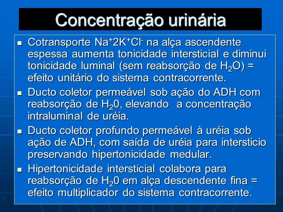 Concentração urinária