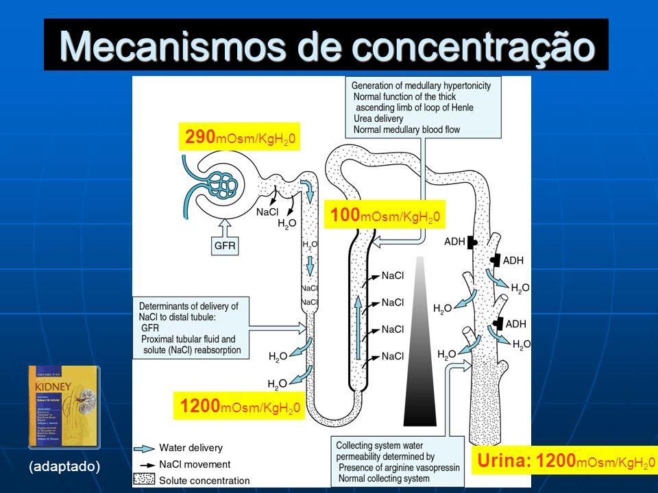 Mecanismos de concentração
