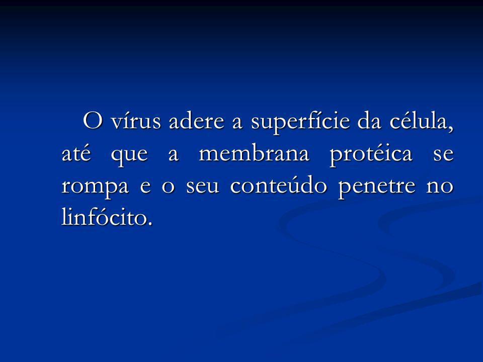 O vírus adere a superfície da célula, até que a membrana protéica se rompa e o seu conteúdo penetre no linfócito.