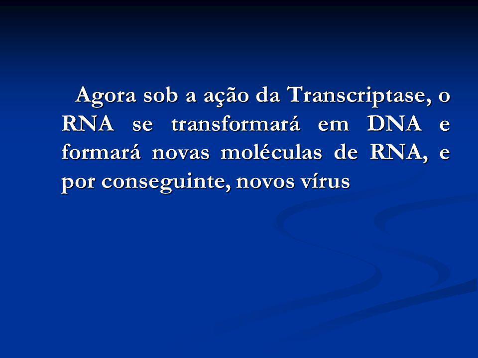 Agora sob a ação da Transcriptase, o RNA se transformará em DNA e formará novas moléculas de RNA, e por conseguinte, novos vírus
