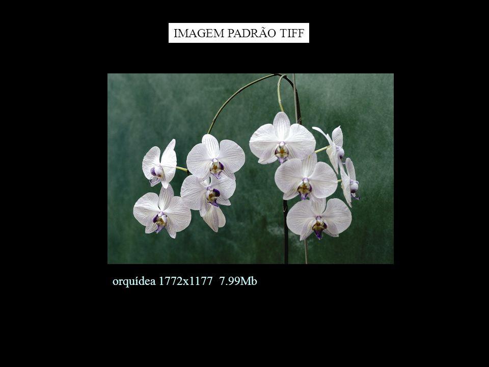 IMAGEM PADRÃO TIFF orquídea 1772x1177 7.99Mb