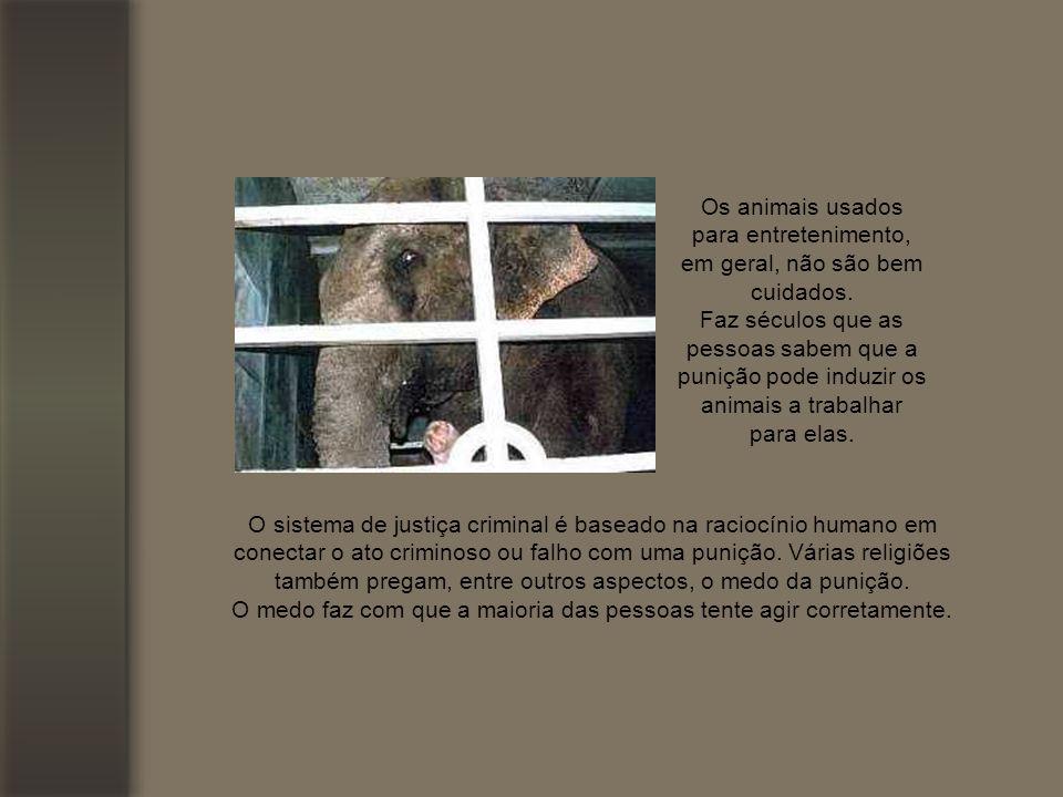Os animais usados para entretenimento, em geral, não são bem cuidados.