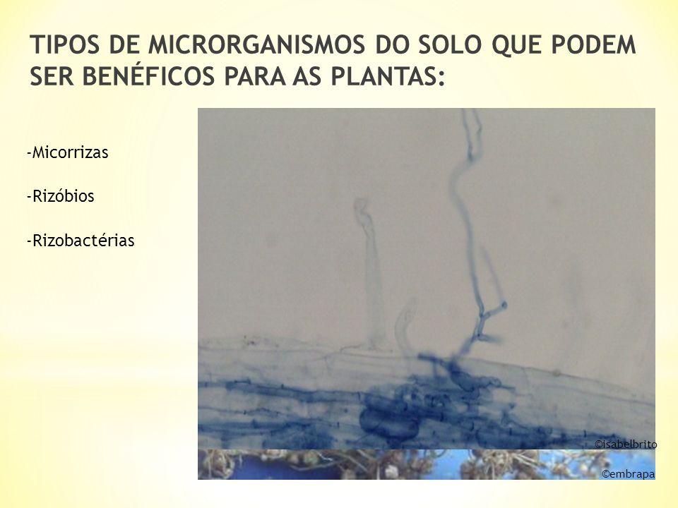 TIPOS DE MICRORGANISMOS DO SOLO QUE PODEM SER BENÉFICOS PARA AS PLANTAS: