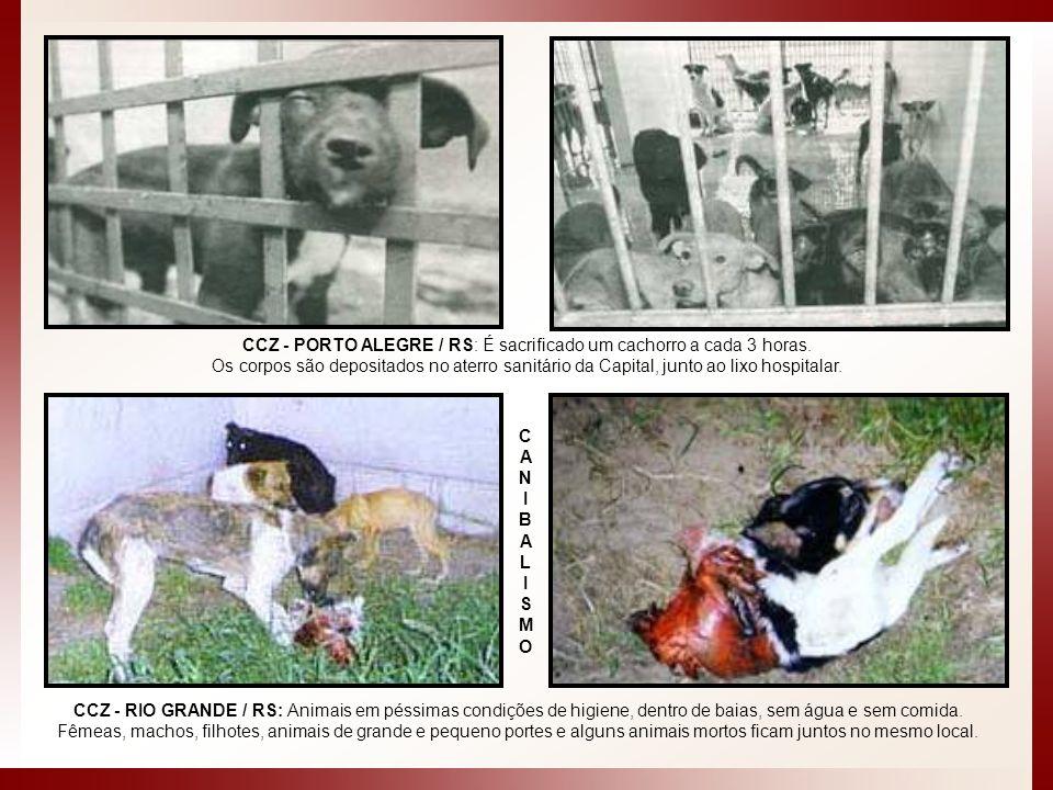 CCZ - PORTO ALEGRE / RS: É sacrificado um cachorro a cada 3 horas.