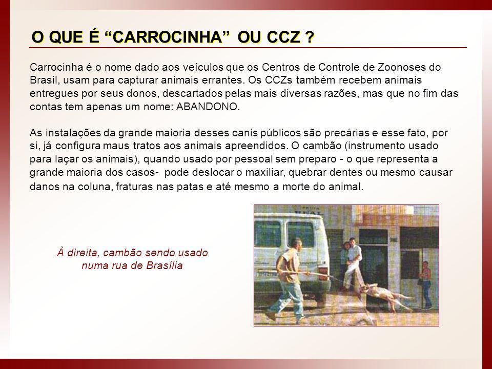 À direita, cambão sendo usado numa rua de Brasília