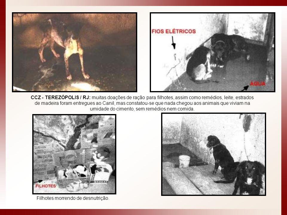 CCZ - TEREZÓPOLIS / RJ: muitas doações de ração para filhotes, assim como remédios, leite, estrados de madeira foram entregues ao Canil, mas constatou-se que nada chegou aos animais que viviam na umidade do cimento, sem remédios nem comida.