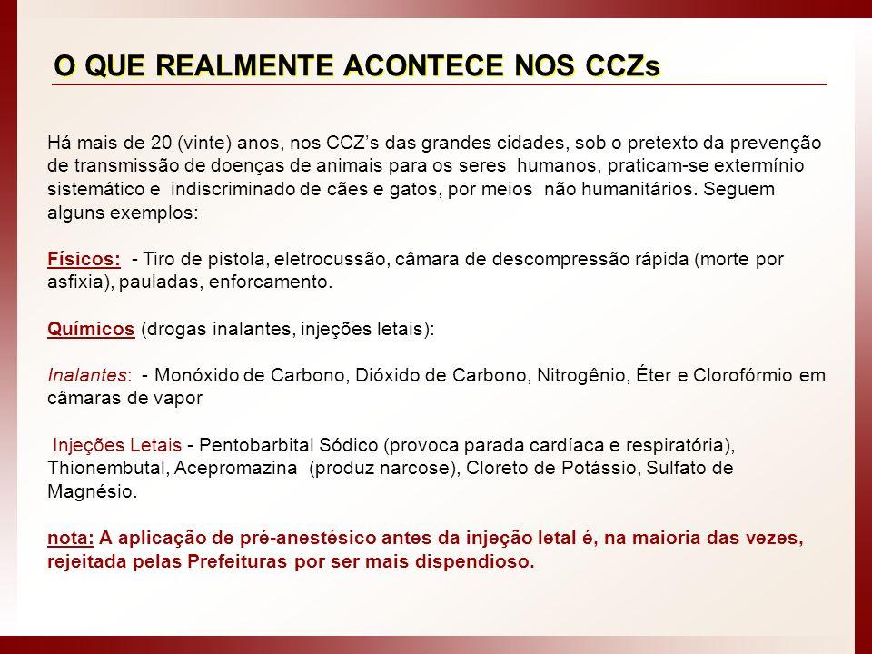 O QUE REALMENTE ACONTECE NOS CCZs