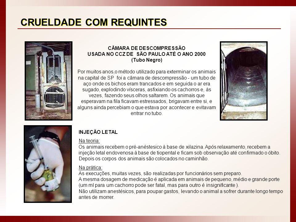 CÂMARA DE DESCOMPRESSÃO USADA NO CCZ DE SÃO PAULO ATÉ O ANO 2000