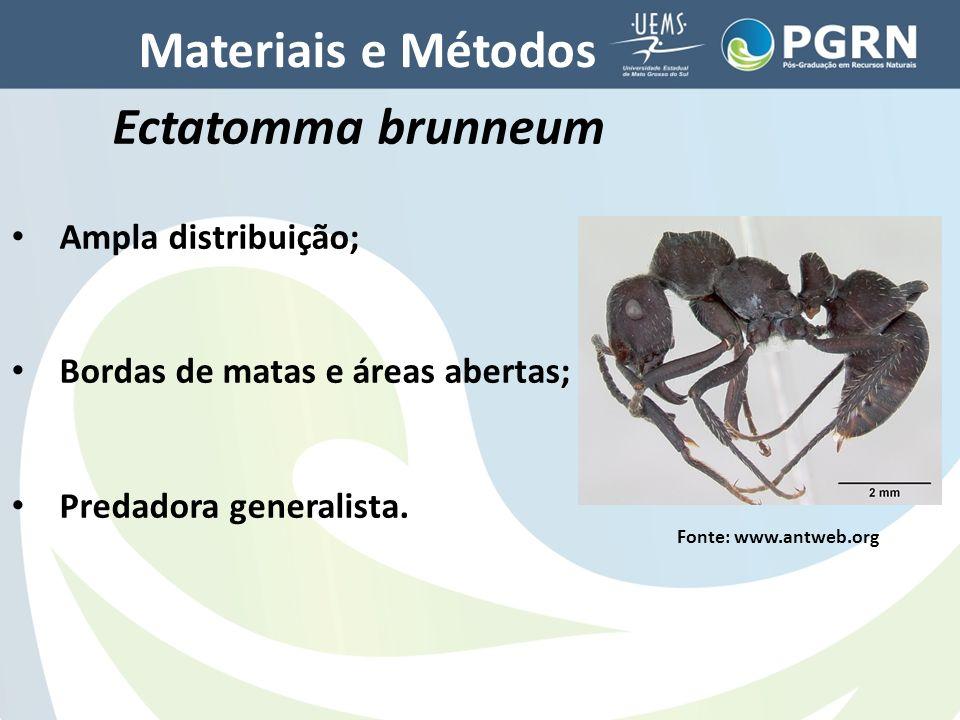 Materiais e Métodos Ectatomma brunneum