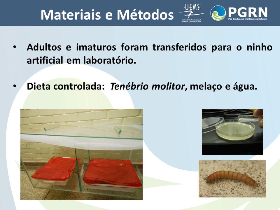 Materiais e Métodos Adultos e imaturos foram transferidos para o ninho artificial em laboratório.