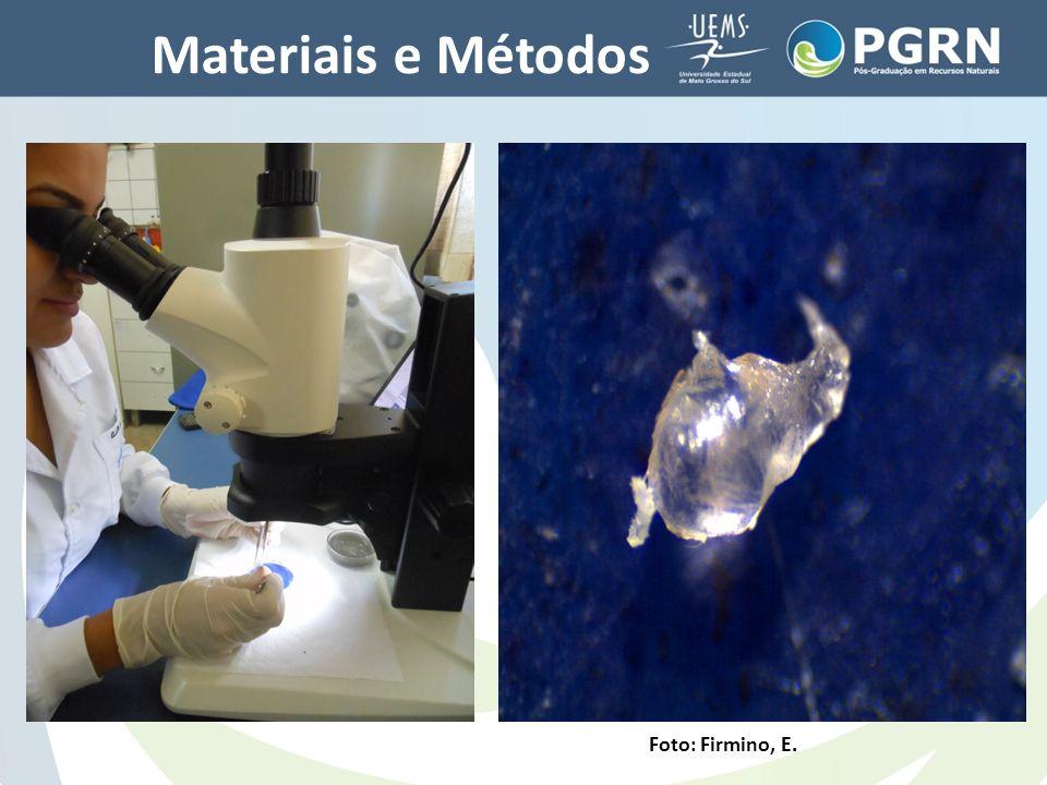 Materiais e Métodos Foto: Firmino, E.