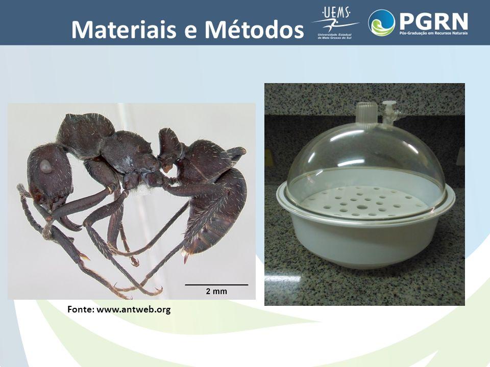 Materiais e Métodos Fonte: www.antweb.org