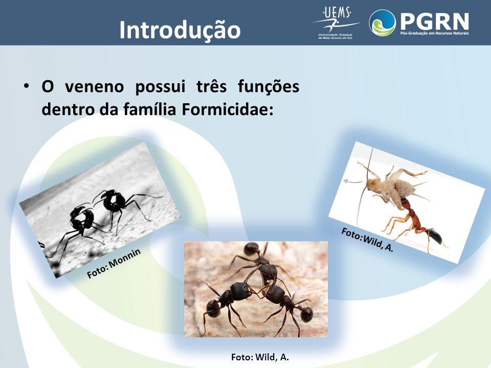 Introdução O veneno possui três funções dentro da família Formicidae: