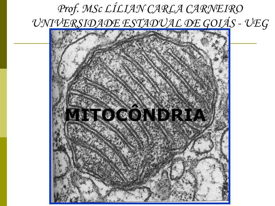 MITOCÔNDRIA Prof. MSc LÍLIAN CARLA CARNEIRO