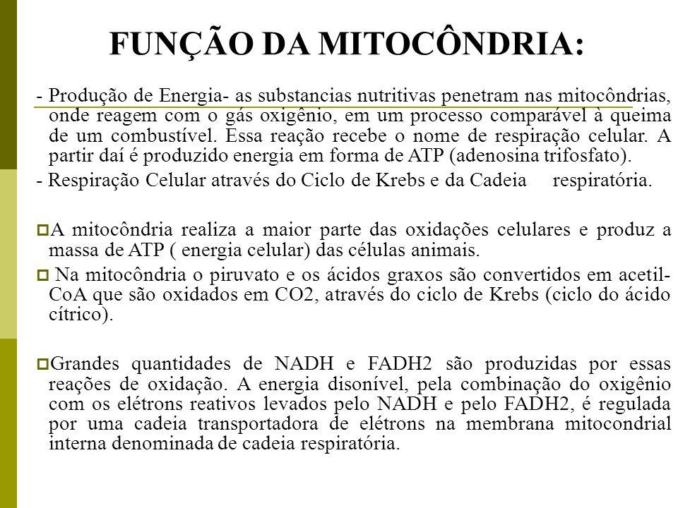 FUNÇÃO DA MITOCÔNDRIA:
