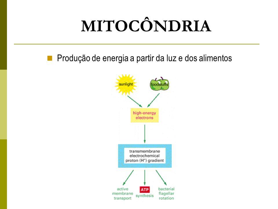 Produção de energia a partir da luz e dos alimentos