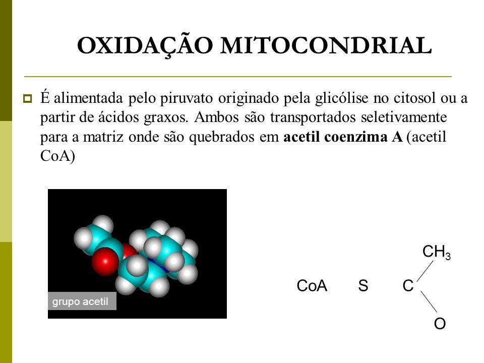 OXIDAÇÃO MITOCONDRIAL