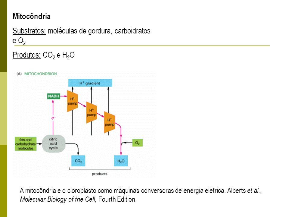 Substratos: moléculas de gordura, carboidratos e O2
