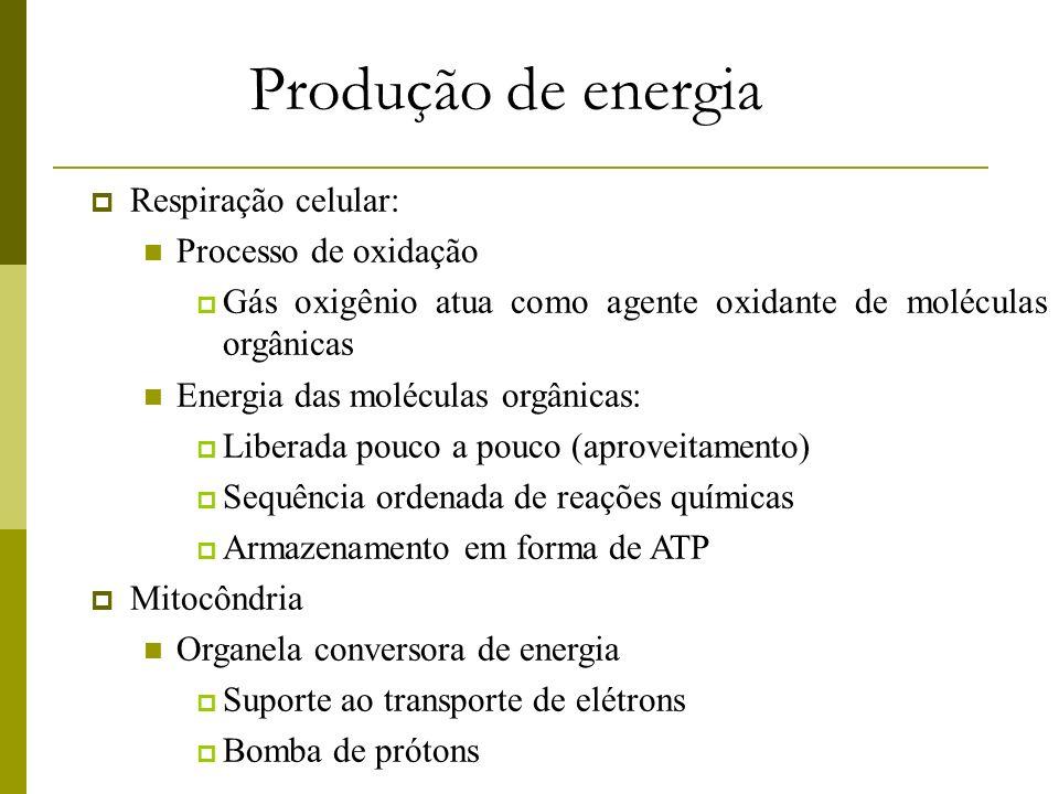 Produção de energia Respiração celular: Processo de oxidação