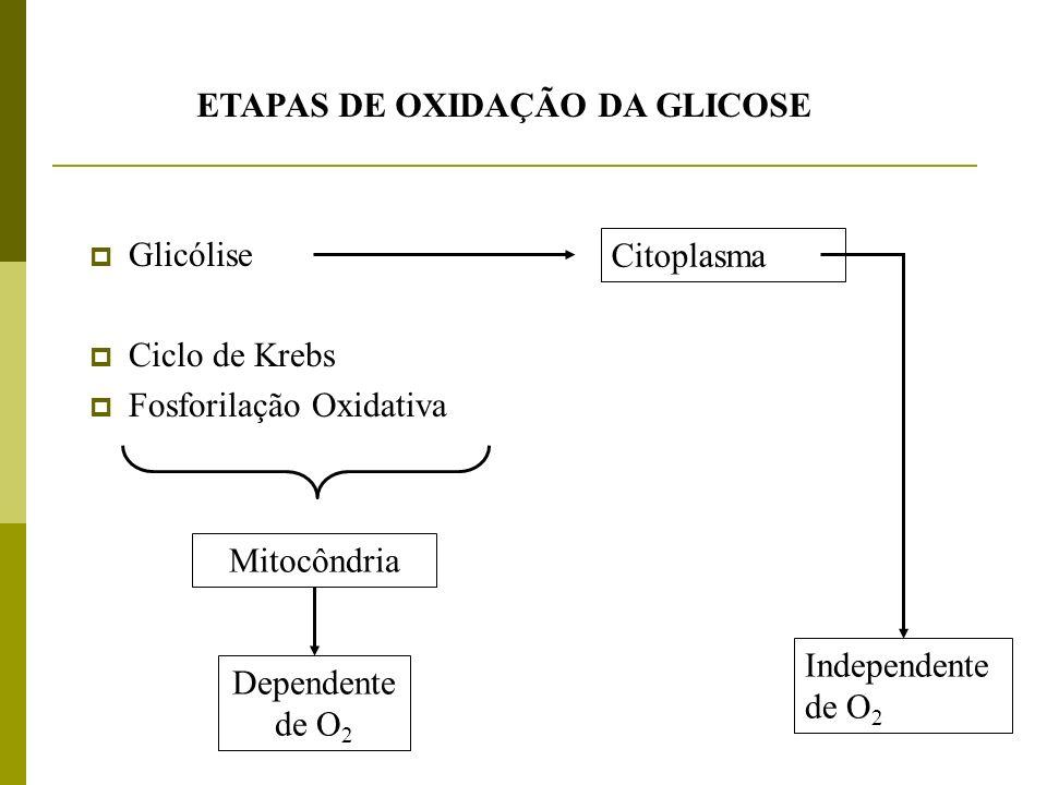 ETAPAS DE OXIDAÇÃO DA GLICOSE