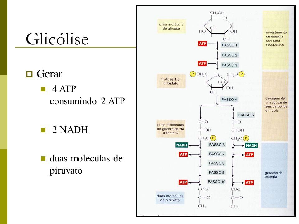 Glicólise Gerar 4 ATP consumindo 2 ATP 2 NADH