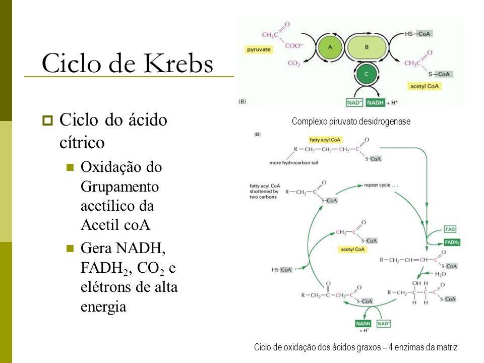 Ciclo de Krebs Ciclo do ácido cítrico