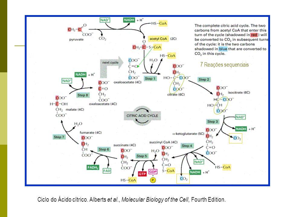Ciclo do Ácido cítrico. Alberts et al
