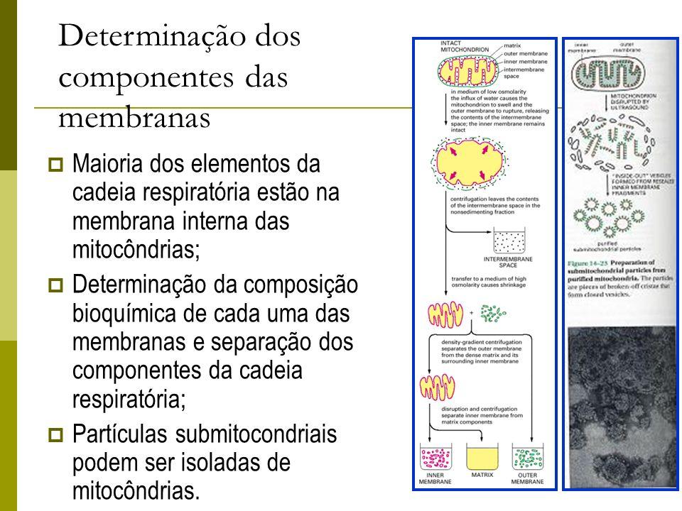 Determinação dos componentes das membranas