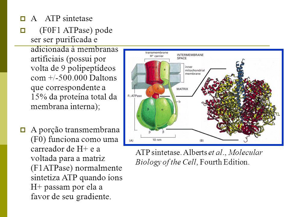 A ATP sintetase