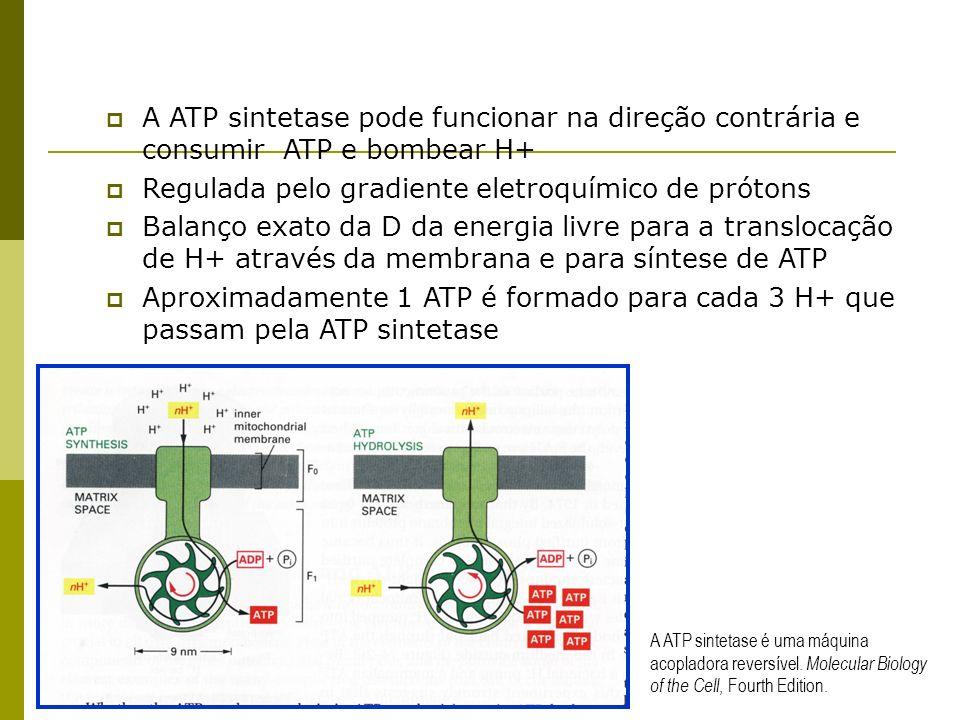 Regulada pelo gradiente eletroquímico de prótons
