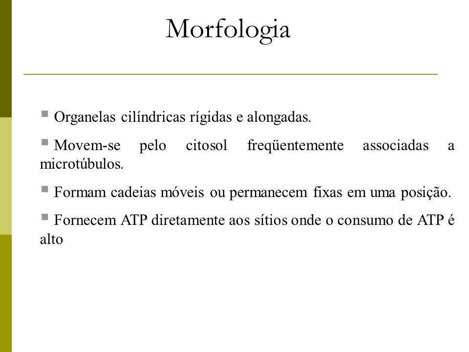 Morfologia Organelas cilíndricas rígidas e alongadas.